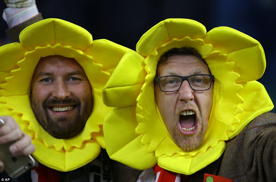 Welsh fans daffodil shout